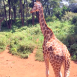Nairobi: 5 must sees for your first visit
